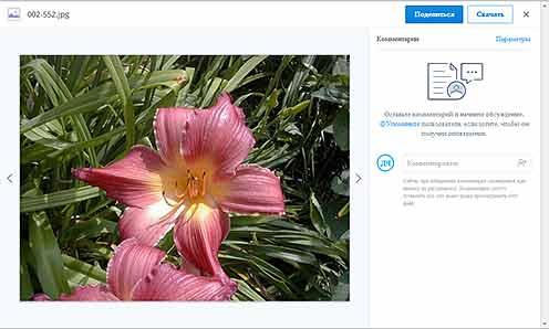 Окно для просмотра фотографий и видео файлов в облаке Dropbox