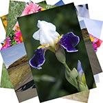 Фото поток в цифровой фотоархив