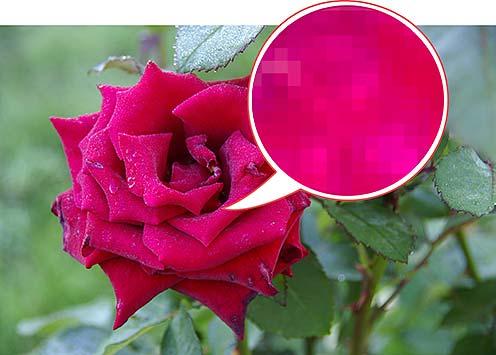 Любая цифровая фотография состоит из отдельных пикселей, информация о которых хранится в файле растрового формата